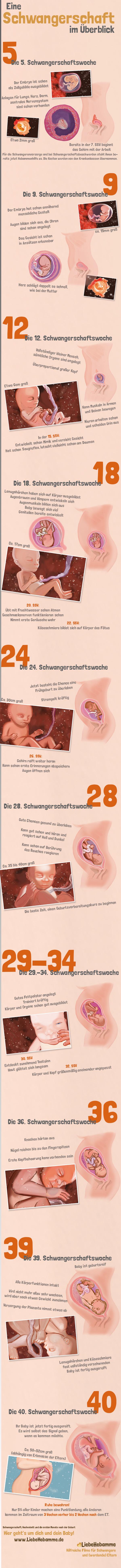 Schwangerschaftswochen Baby im Bauch